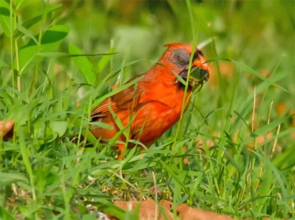 Cardinal 202