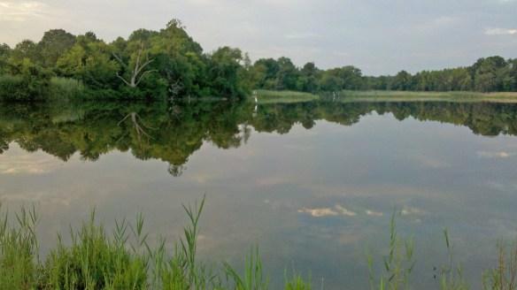 Marsh Pond 4