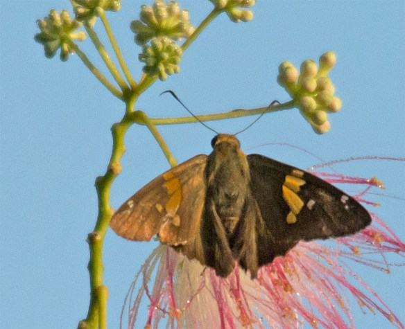 Moth 211