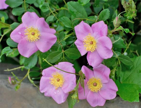Flower 66