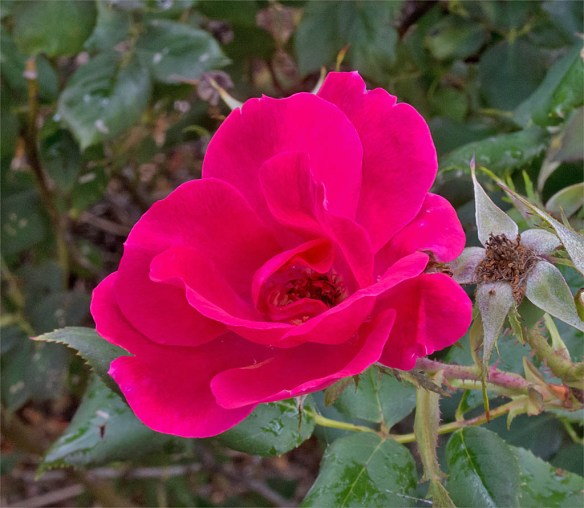 Flower 76