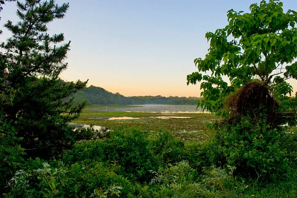 Lake Artemesia 39