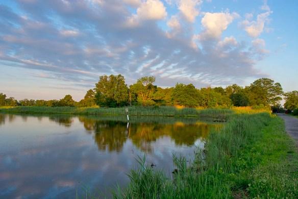 Marsh Pond 19