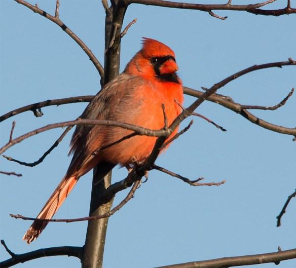 cardinal-2016-27