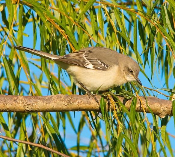 mockingbird-2016-15