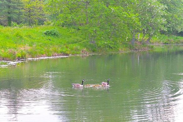 Lake Artemesia 86