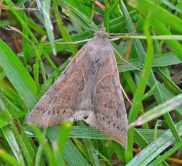 Moth 215
