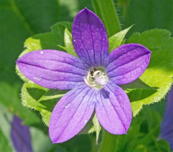 Flower 94