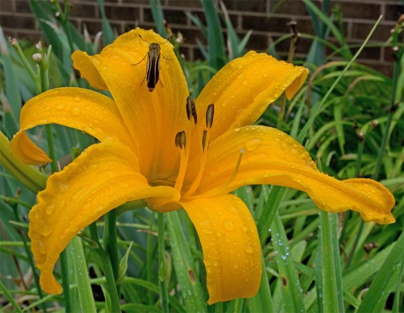 Flower 98