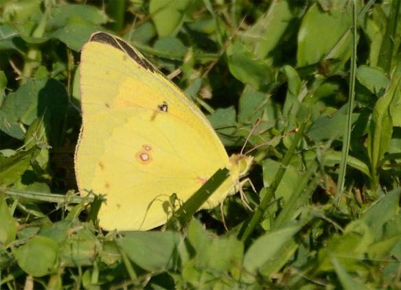 Butterfly 63