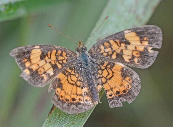 Butterfly 65