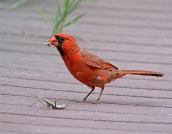 Cardinal 2017-9