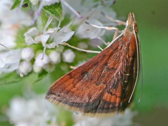 Moth 220