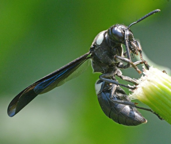 Wasp 28