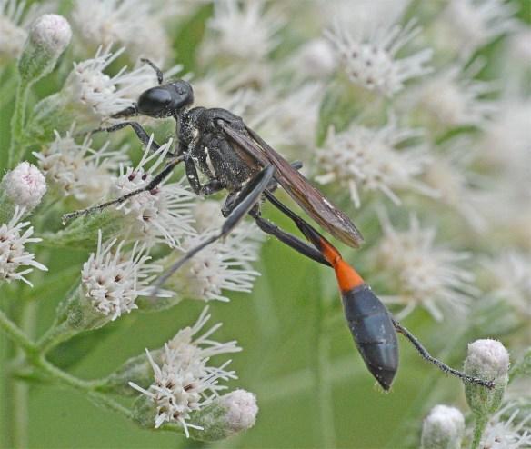 Wasp 38