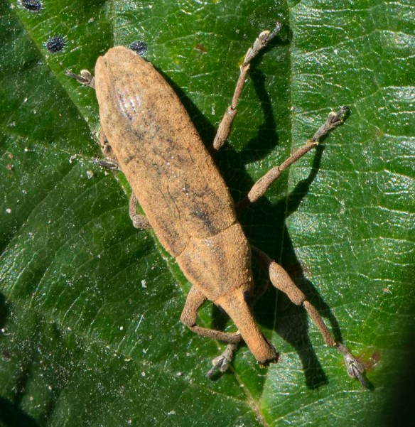 Partridge Bug 8