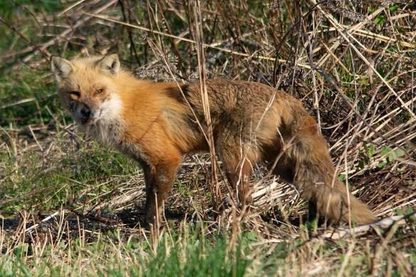 Fox 95