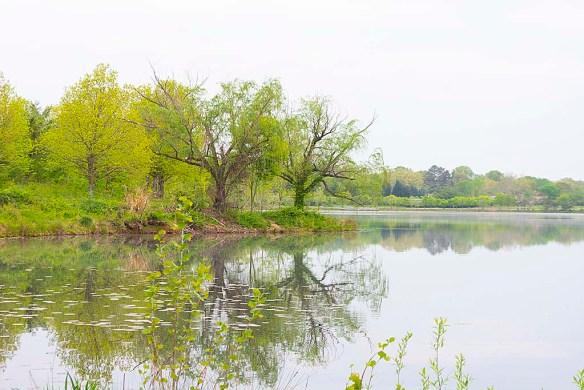 Lake Artemesia 103