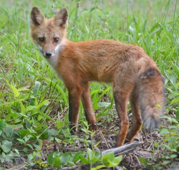 Fox 103