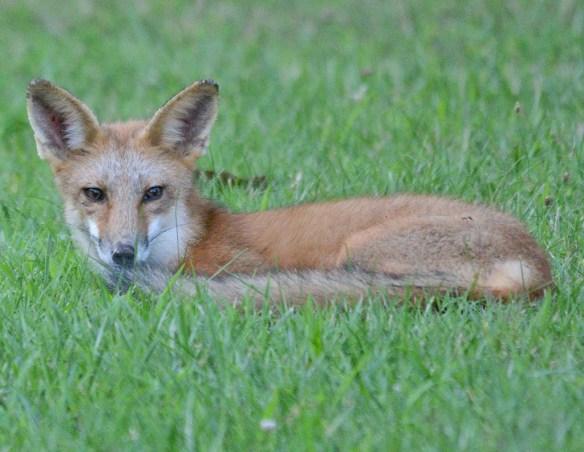 Fox 108
