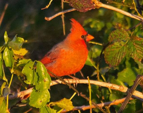 Cardinal 2018-17