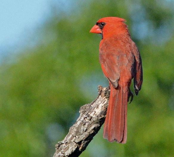 Cardinal 2019-2