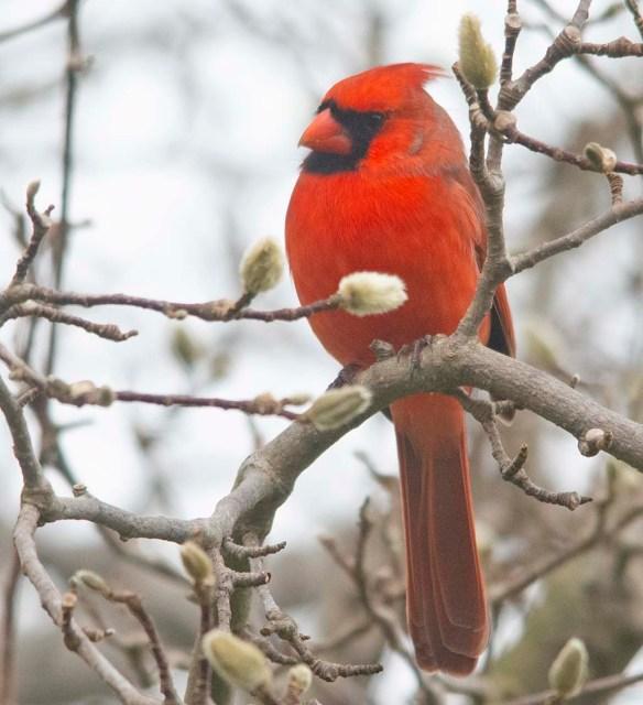 Cardinal 2020-29