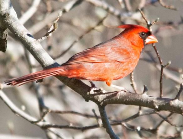 Cardinal 2020-34
