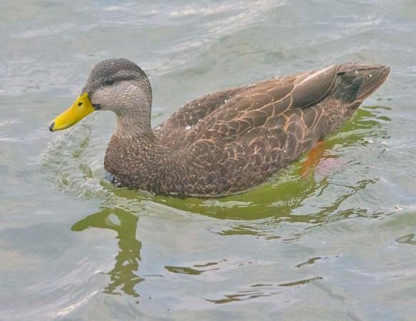 Black Duck 2021-2