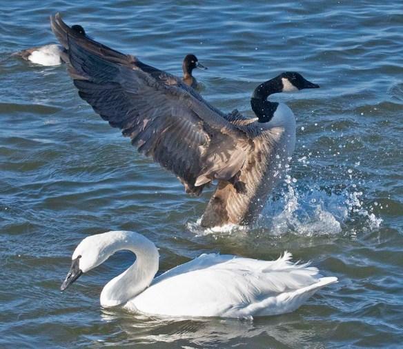 Canada Goose 2021-3