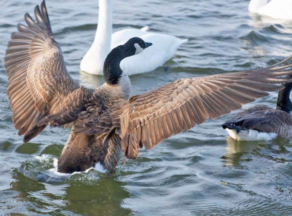 Canada Goose 2021-5