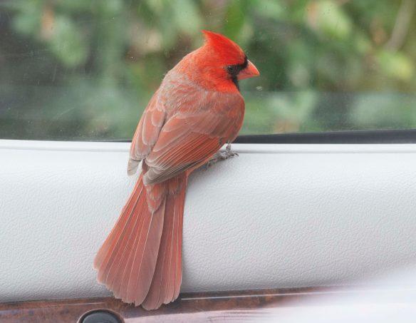 Cardinal 2021-4