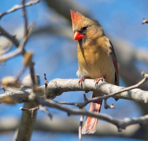 Cardinal 2021-21