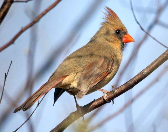 Cardinal 2021-43