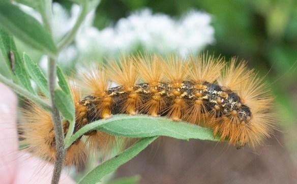 Caterpillar 237
