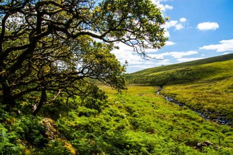 Dartmoor National Park, Wistman's Wood National Nature Reserve