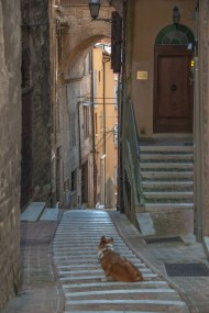 Bommel in Perugia