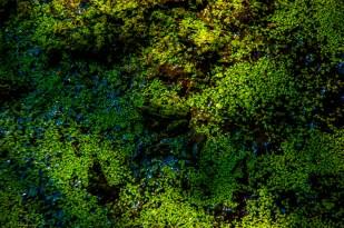 Find the frog - Das Insel Rügen