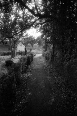 Holzwege (Off The Beaten Track)