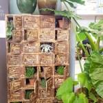 kast met planten