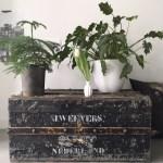 oude kist met planten