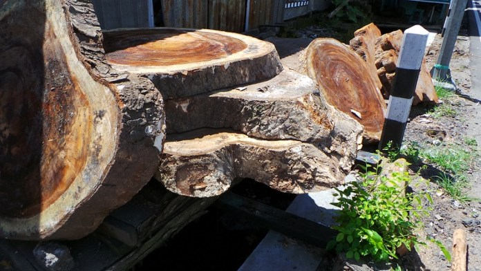 monkey tree suar hout troedoor