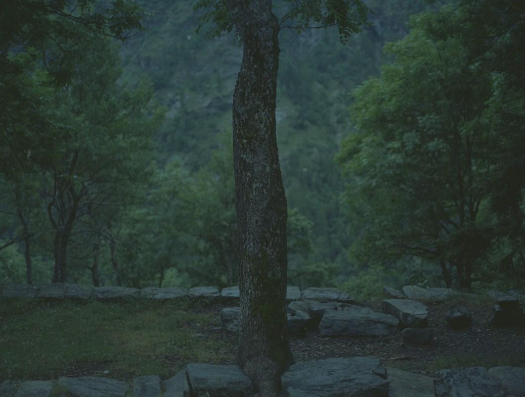 arbresurruine1440_72
