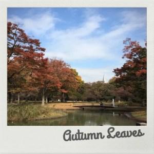 紅葉☆代々木公園