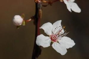 spring-1191638_1280