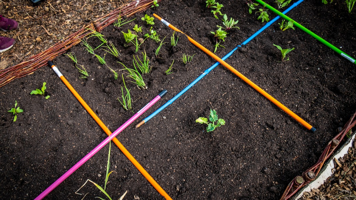 Photograph shows a patch of soil with plants, demarcated by colourful pencils.