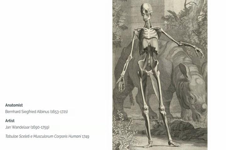 Рисунки по анатомии человека эпохи Возрождения