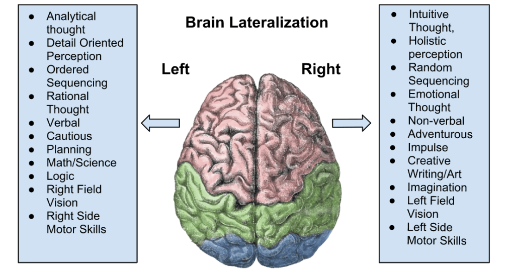 Left and Right Hemisphere of the Brain   Functions ...
