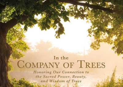 "Andrea Sarrubi Fereshteh's new book is ""In the Company of Trees"""
