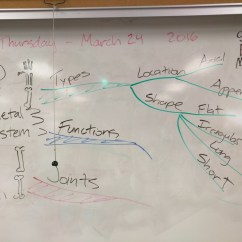 Concept Map Skeletal System Diagram Human Skeleton With Names Activity Mindmap Bio Class Examples